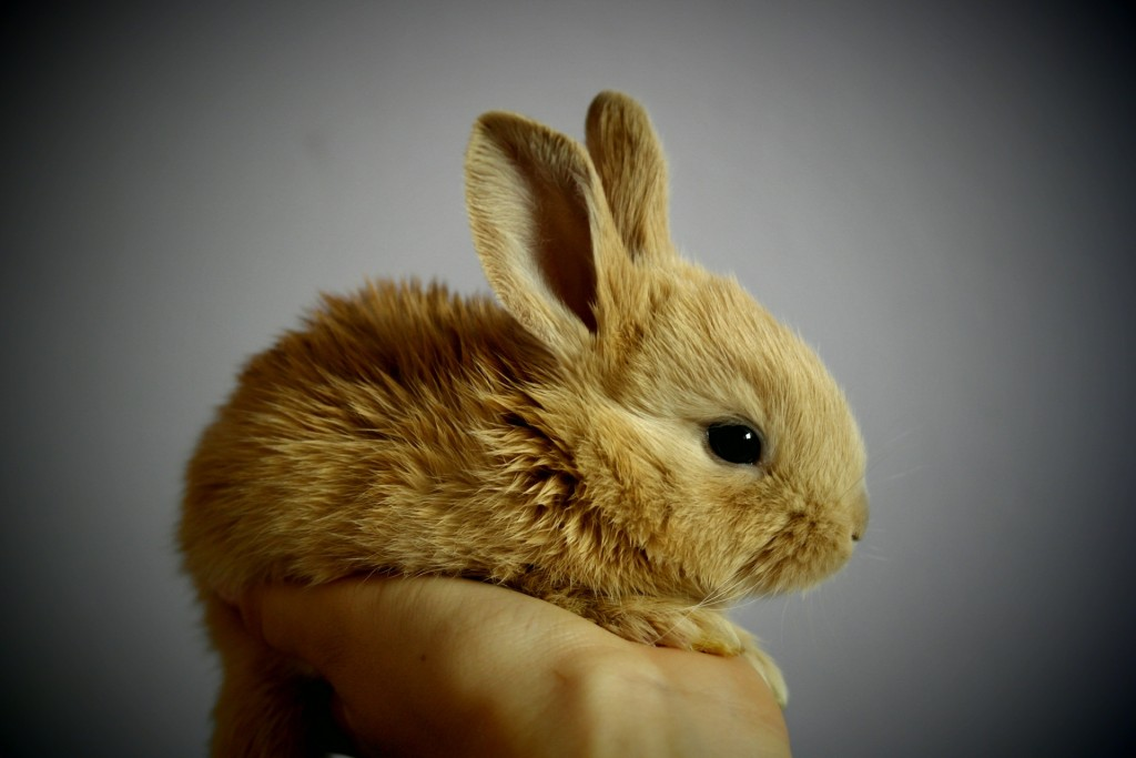 Writers Beware: How To Banish The Fluff-Bunny